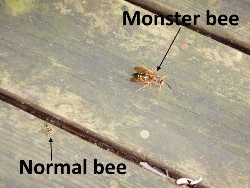 monster bee
