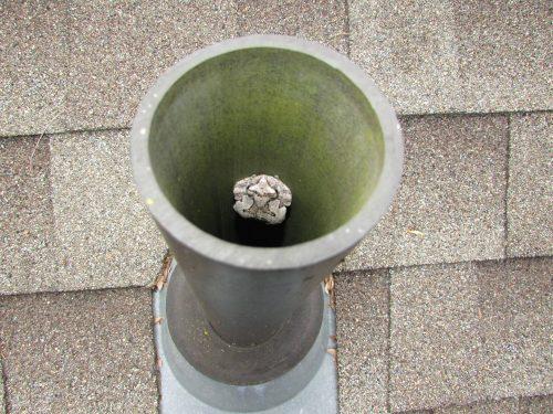 Toad in plumbing vent