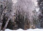 Lindenhills10-frost