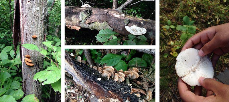 Wirth2014-mushrooms