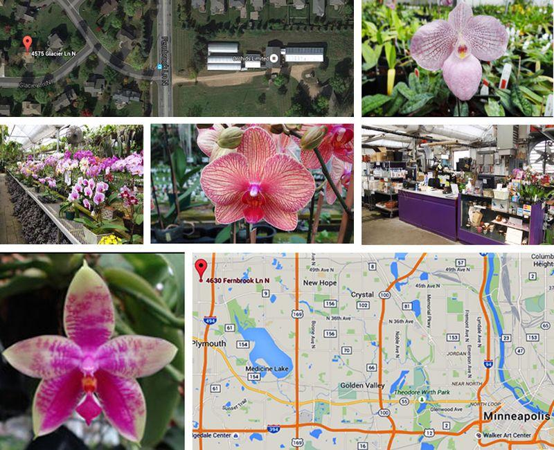 Orchids2