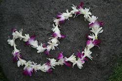 Hawian orchid lei - free